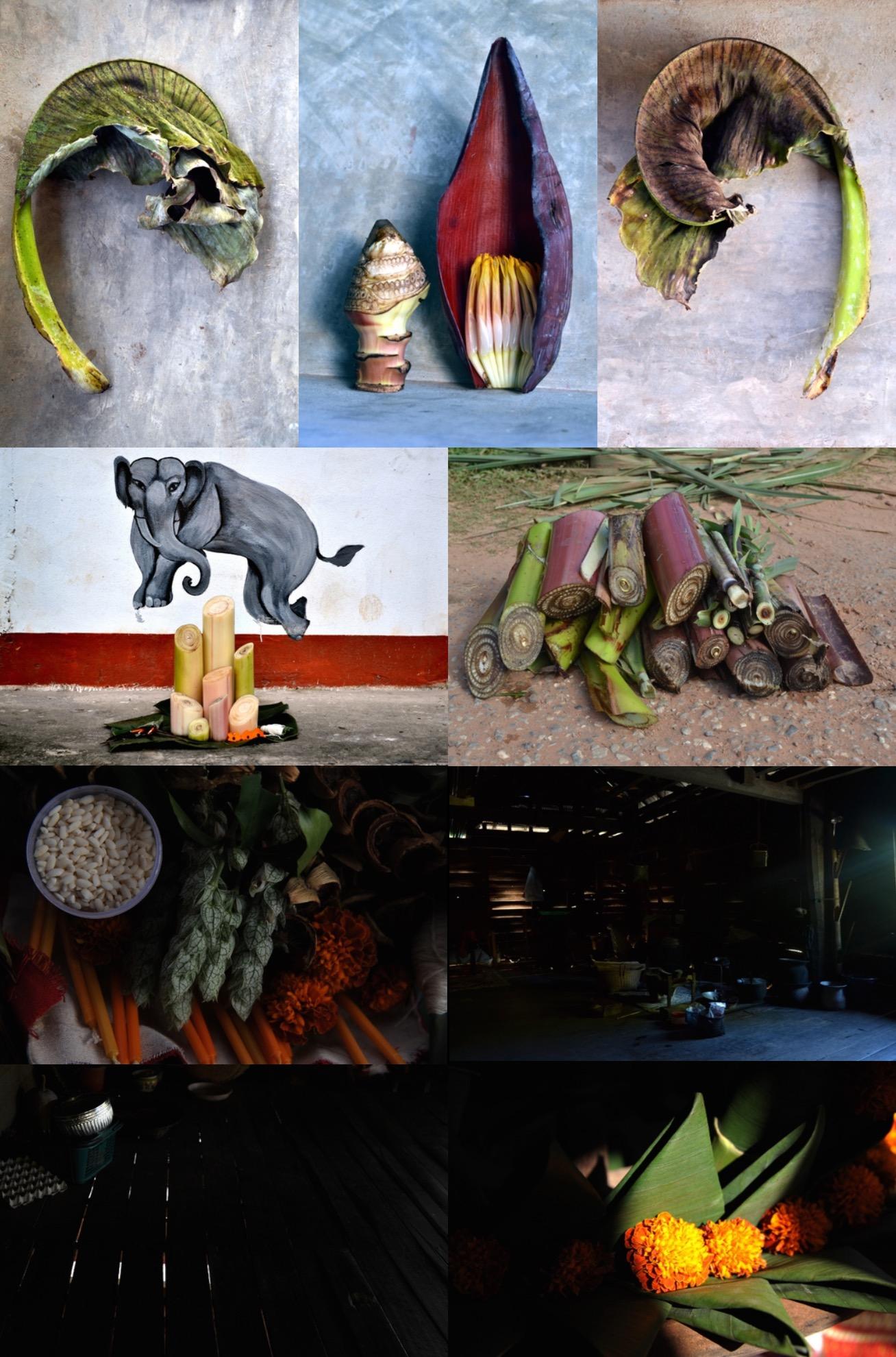 L'Herbier de l'éléphant, Aliette COSSET Caroline ROSSE photos Laos